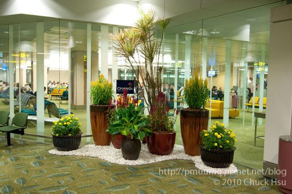 登機門旁的植栽擺的很整齊.jpg