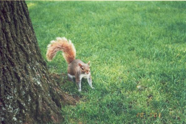 來和我say hello的松鼠