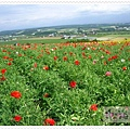 富良野Flower Land