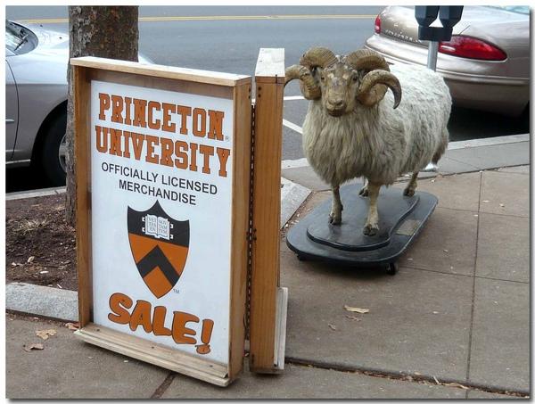 1129 Princeton street (3).jpg