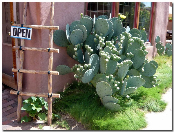 0724 Albuquerque (10)拷貝.jpg