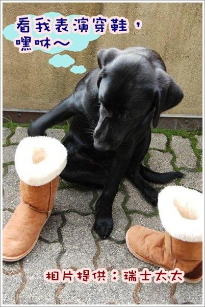shoes (4).jpg