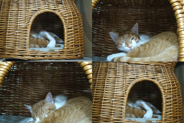 橘子睡窩照1.jpg