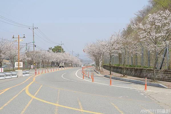 馬耳山櫻花3