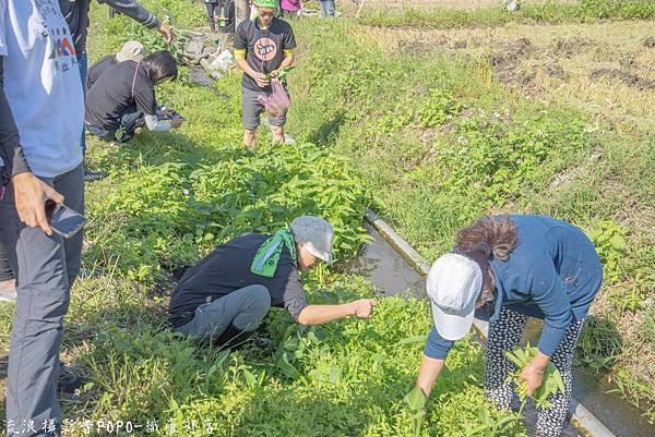 織羅部落採水菜1