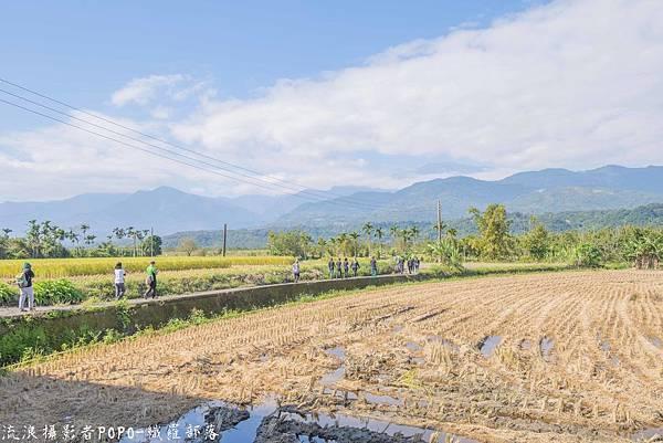 織羅部落採水菜