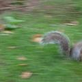 小松鼠亂跑亂跑