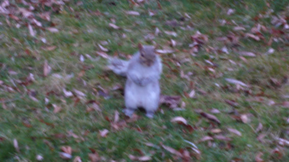 又是可愛的小松鼠