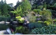 Blue Botanics