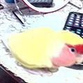 偽裝成鴨子玩具