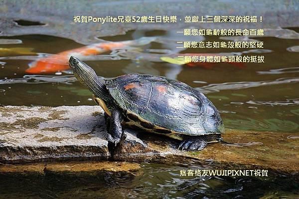 PONY-268208157