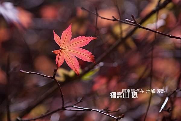 IMG_7985.jpg