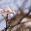 IMG_8371.jpg