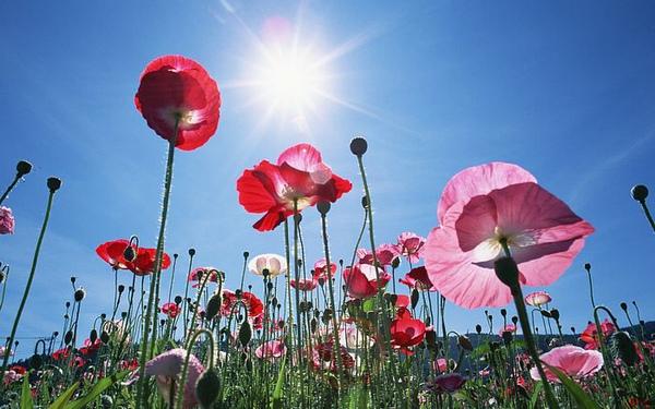 1440x900_Blue_Sky_Flowers_HM014_350A.jpg