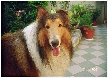 娘家小犬 - Junior