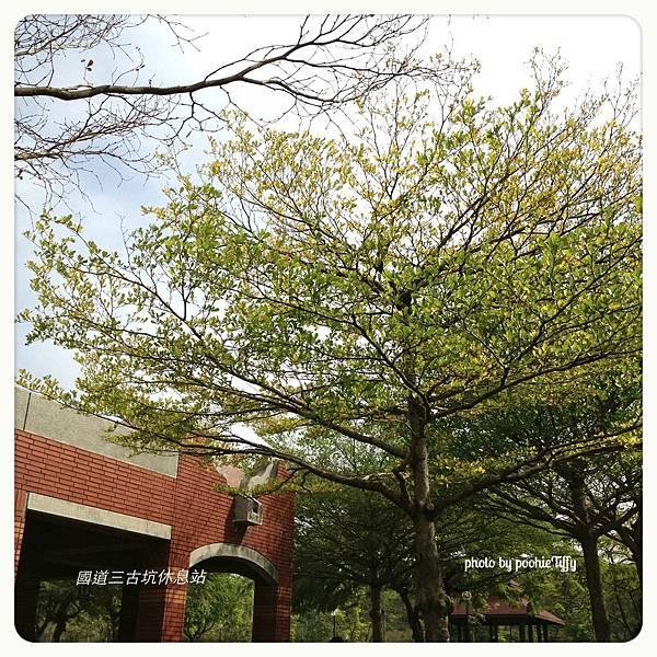 20130210 春節假期隨手拍拍 (5)