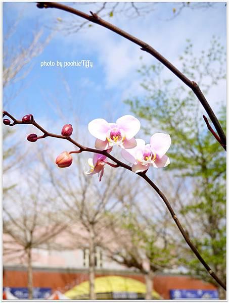 20130210 春節假期隨手拍拍 (24)
