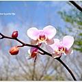 20130210 春節假期隨手拍拍 (25)