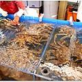 20130228 竹圍魚港 (54)