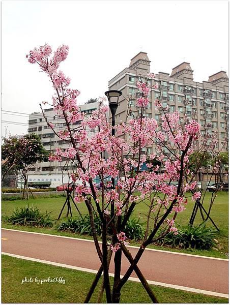20140316 南崁溪旁運動公園_10.jpg