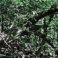 IMG_4508+15__-15_tonemapped.jpg