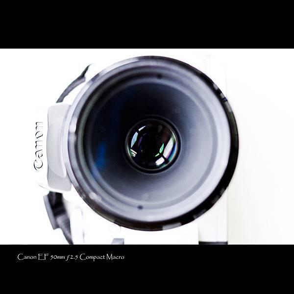 50mm macro-1.jpg