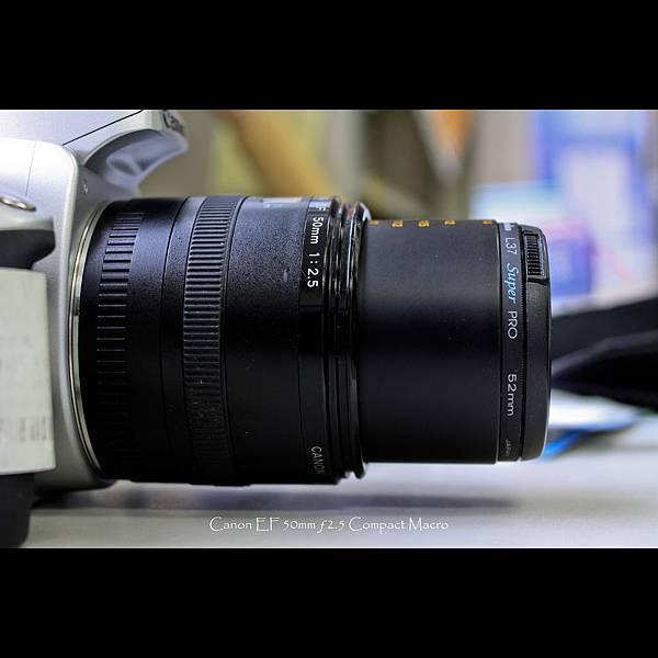 50mm macro-3.jpg