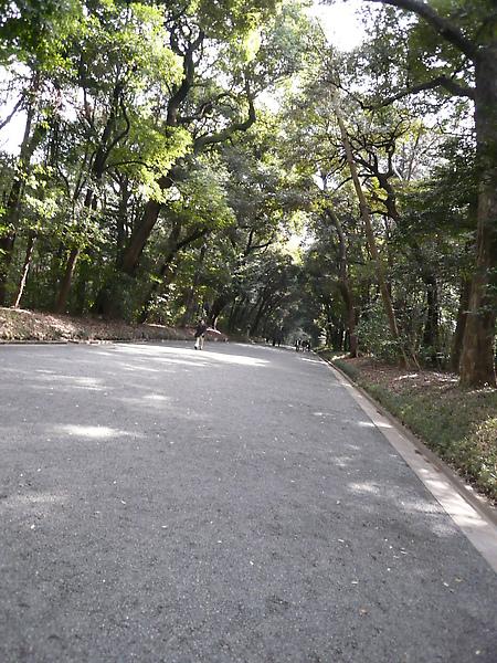走在石子路上, 不知不覺會放慢腳步..深怕腳踏石子的聲音會擾亂安寧