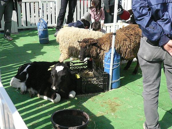 也有牧場動物與你一同歡樂