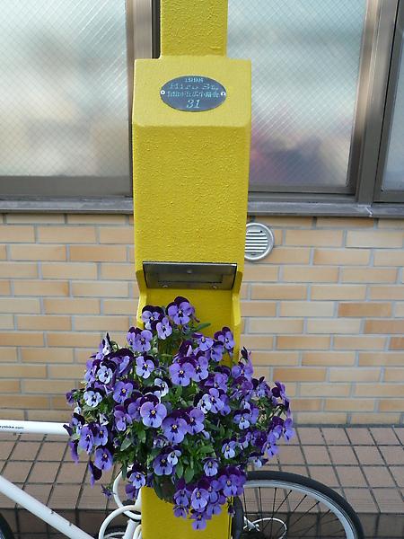 自由之丘的街燈, 有特別裝飾一番喔~花的種類也不一樣