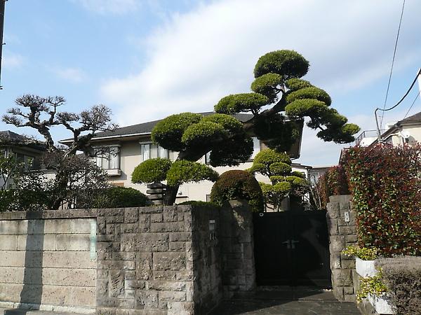 沒想到真能親眼見到這種造型的樹