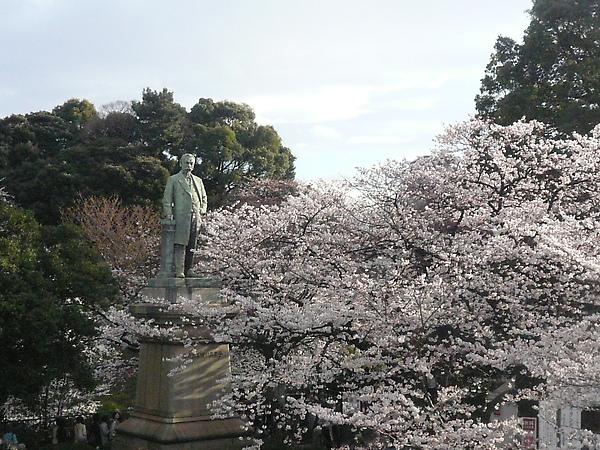 從天橋上拍, 三菱的創辦人+櫻花