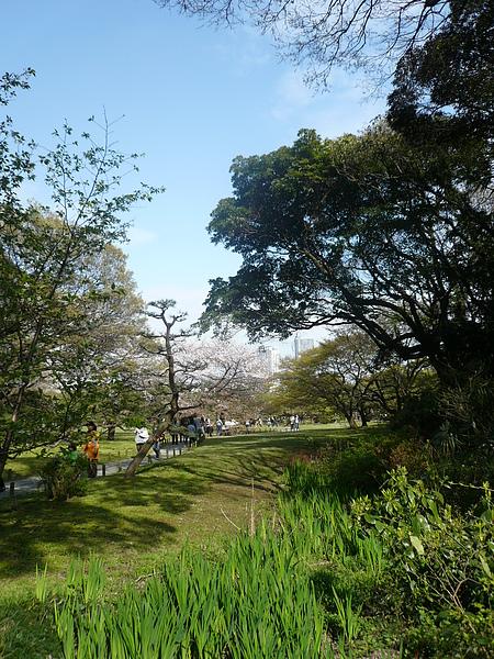 除了櫻花, 園內還有許多植物