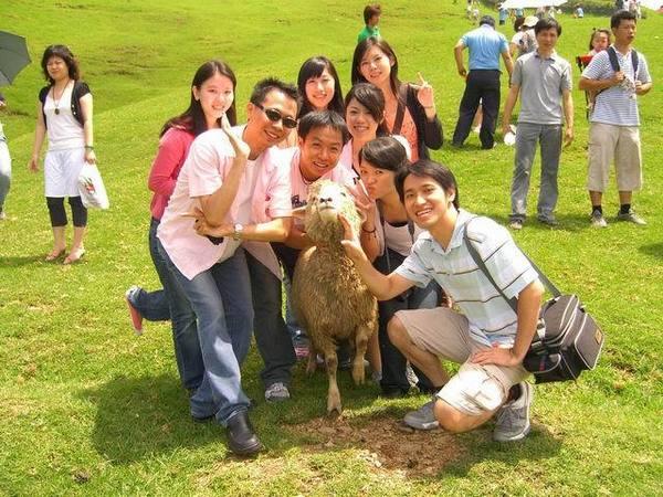 有一隻小羊朝我們走了過來