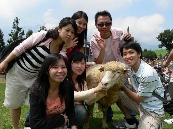 這些羊似乎都餓很久了