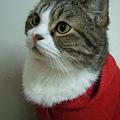 2009.1.1 新的一年穿上紅色討吉利