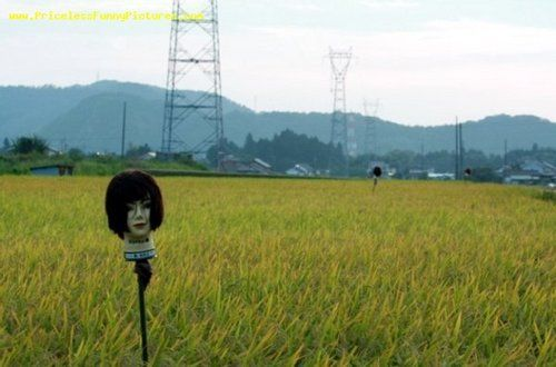 嚇人的稻草人