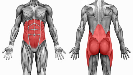 core-muscles-group