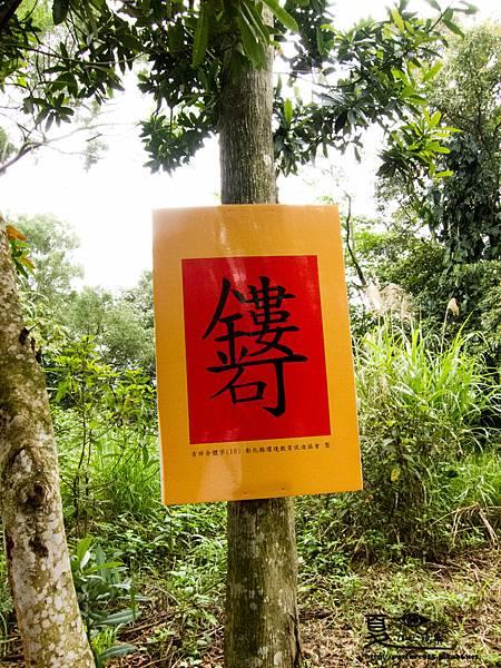2013藤山桐花-0250