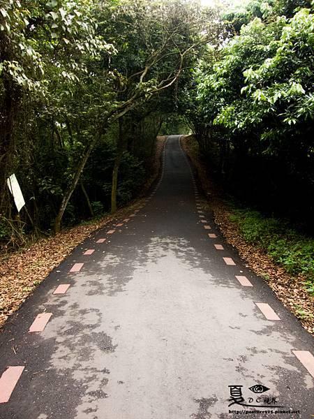 2013藤山桐花-0262