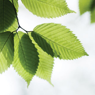 go_green_leaves_320