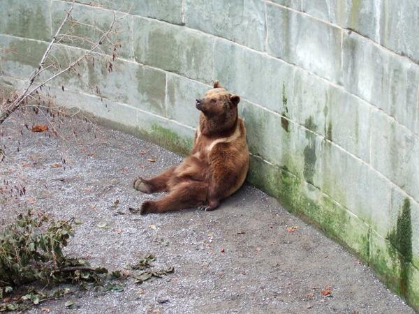 伯恩吉祥物---熊