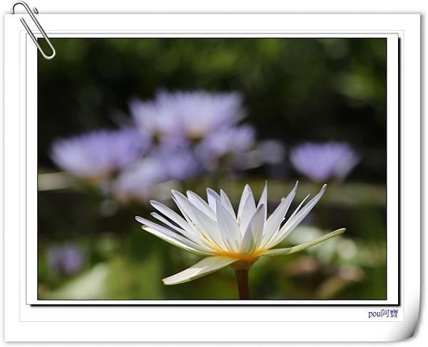 IMG_4855.jpg