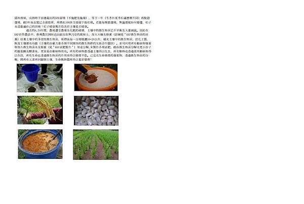 KKF自然農法種植水稻摘要二10303