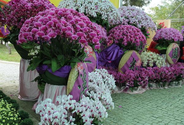 台灣蘭花節