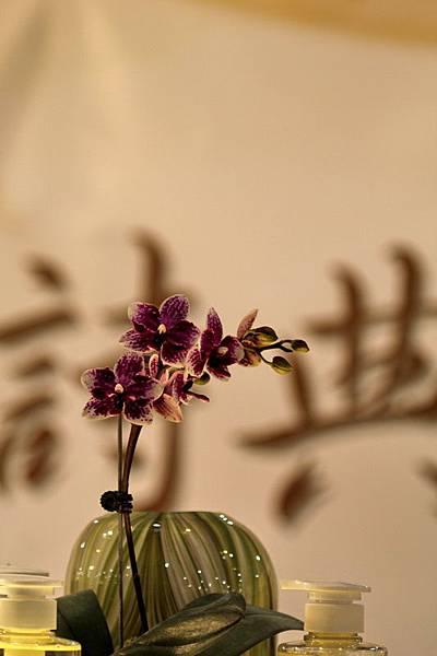 台灣國際蘭花節