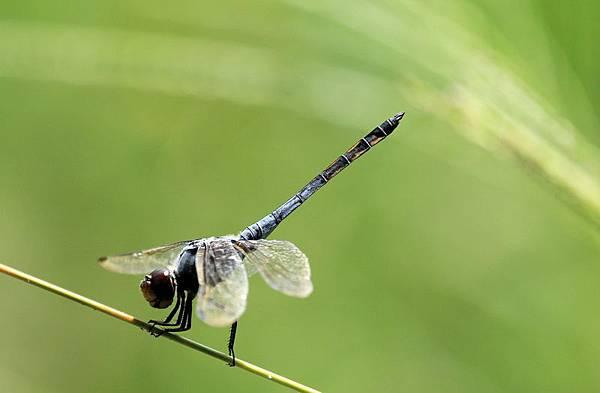 蜻蜓與花蝴蝶