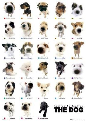 The-Dog1.jpg