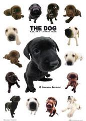 The-Dog5.jpg