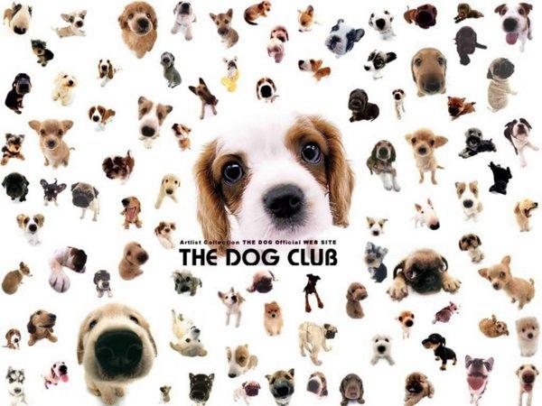 The-Dog2.jpg
